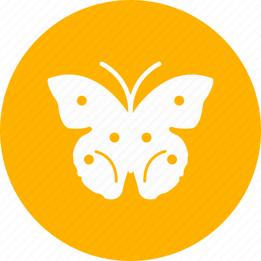 butterfly, fly, insect, nature icon