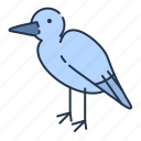bird, sea gull, summer icon