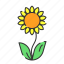 green, plant, seed, summer, sun flower icon