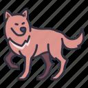 animal, nature, wild, predator, wolf, dog, fur