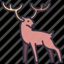 deer, forest, nature, wildlife, animal, horns