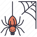 halloween, spider, web, spiderweb, scary, nature, forest