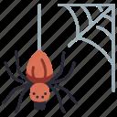 halloween, spider, web, spiderweb, scary, nature, forest