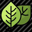 botanical, garden, leaf, leaves, nature, plant icon