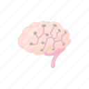 brain, cartoon, human, scan, scanning, sensors, technology icon