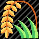 farming, gardening, grain, plant, rice, wheat
