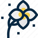 blossom, floral, flower, plant, plumeria, thailand, tropical icon