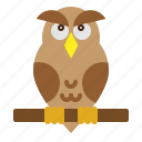 animal, bird, education, owl, wisdom icon