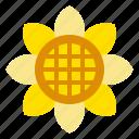 flower, nature, spring, sun, sunflower