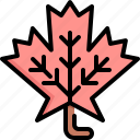 autumn, environment, garden, leaf, maple, nature, plant icon