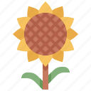 flower, forest, gardening, nature, sun, sunflower, tree
