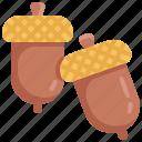 acorn, autumn, healthy, nut, thanksgiving, vegetable