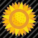blossom, garden, botanical, petals, sunflower, flower, nature