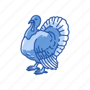 bird, chicken, turkey, wild turkey icon