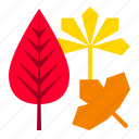 autumn, fall, leaf, thanksgiving icon