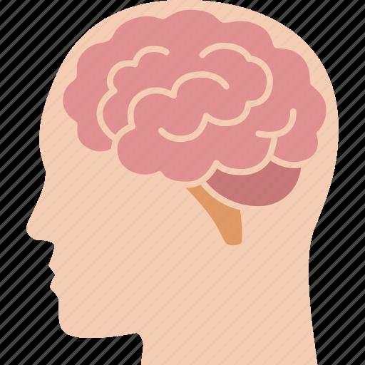 brain, brainstorm, head, intelligence, mind, organ, side icon
