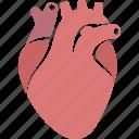 cardiology, cardiovascular, circulatory, heart, human, organ, system icon