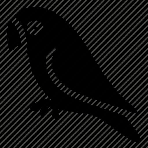 animal, bird, hobby, parot, pet, zoo icon