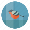 bird, bullfinch, cold, winter icon