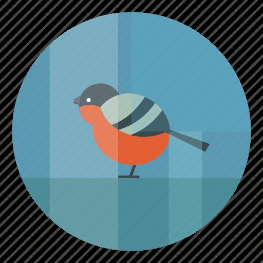 bird, bullfinch, cold, winter icon