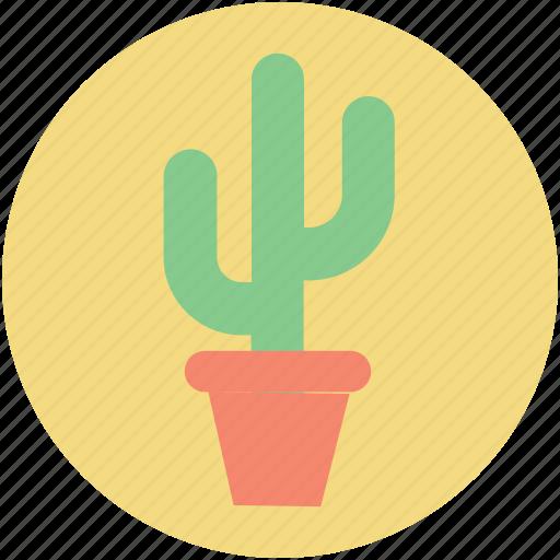 cactus plant, desert plant, potted cactus, thorn plant, wild plant icon