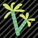 nature, tree, plant, coconut