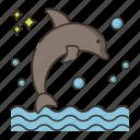 animal, dolphin, dolphin show, ocean, sea