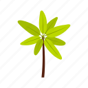 beach, exotic, leaf, nature, palm, summer, tropic