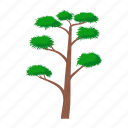 branch, green, nature, pine, plant, tree, wood icon