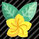 flower, hawaii, tropical, blossom, holidays