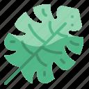 leaf, garden, leaves, holidays, nature