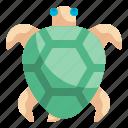 turtle, animals, aquarium, zoo, pet