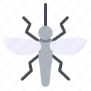 bug, dengue, insect, mosquito, pest