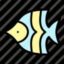 tropical, fish, sea, animal