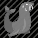 aquatic animal, aquatic mammal, creature, fur seal, specie, walrus icon