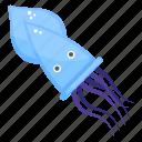 calamari, marine animal, sea creature, sea life, squid