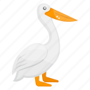 marine animal, pelecanus, pelican, sea creature, sea life icon