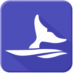 fin, sea, underwater, whale icon