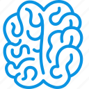 anatomy, brain, mind icon