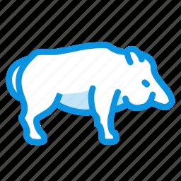 boar, pig, wild icon