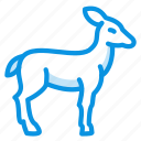 springbok, deer, doe icon