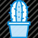 cactus, pot
