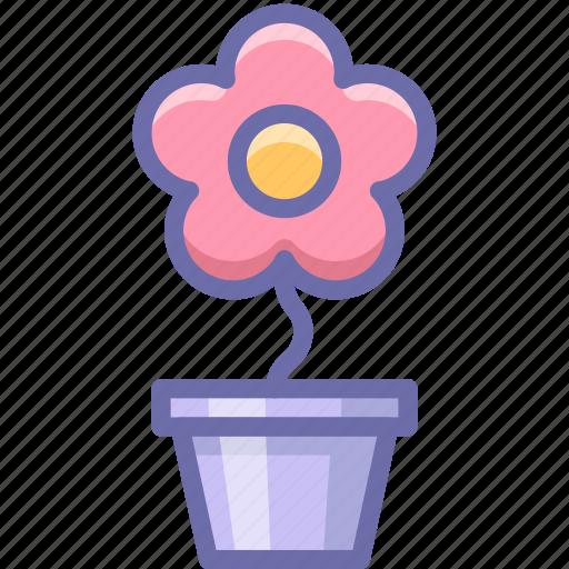 flower, pot, romantic icon