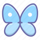 butterfly, delicate, sensitive, washing