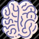 anatomy, brain, intellect, knowledge icon