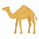 animal, camel, desert, home, ungulate, vehicle icon