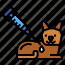 cat, vaccine, vaccination, animal, syringe