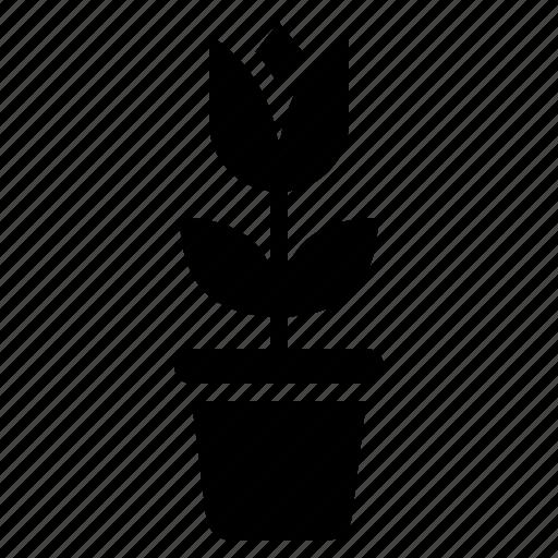 Flora, floral, flower, love, tulip, valentine icon - Download on Iconfinder