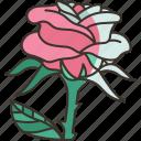rose, flower, flora, romantic, valentine