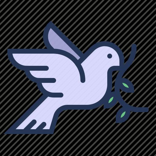 bird, dove, love, pigeon, relationship, romance, valentine day icon